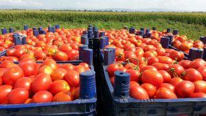 Bakan Pejcan açıkladı: Türkiye'den domates sevkiyatıyla ilgili Rusya'dan yeni karar
